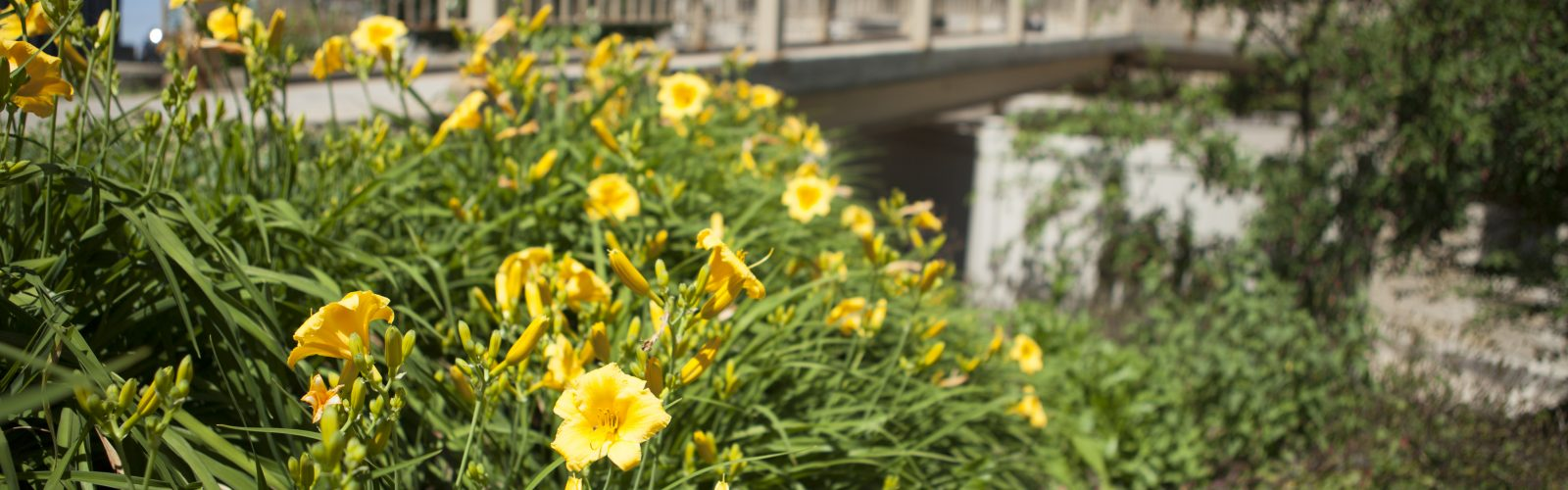 Summer flowers outside of Waters Hall
