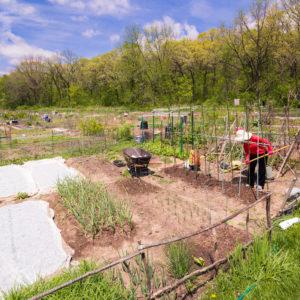 Garden plots in University Apartments' Eagle Heights gardens.