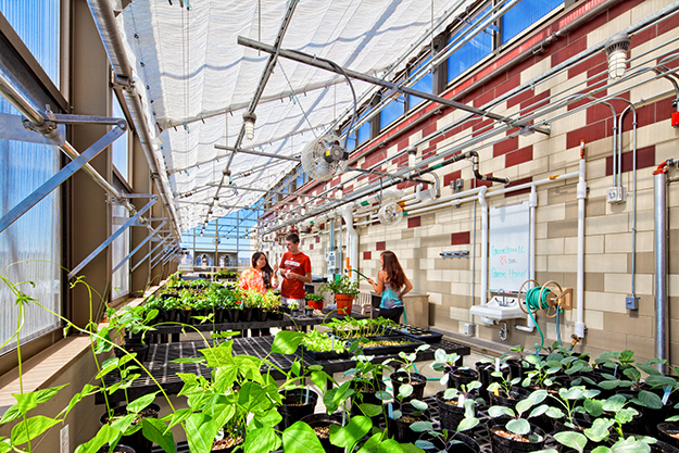 Leopold Hall greenhouse