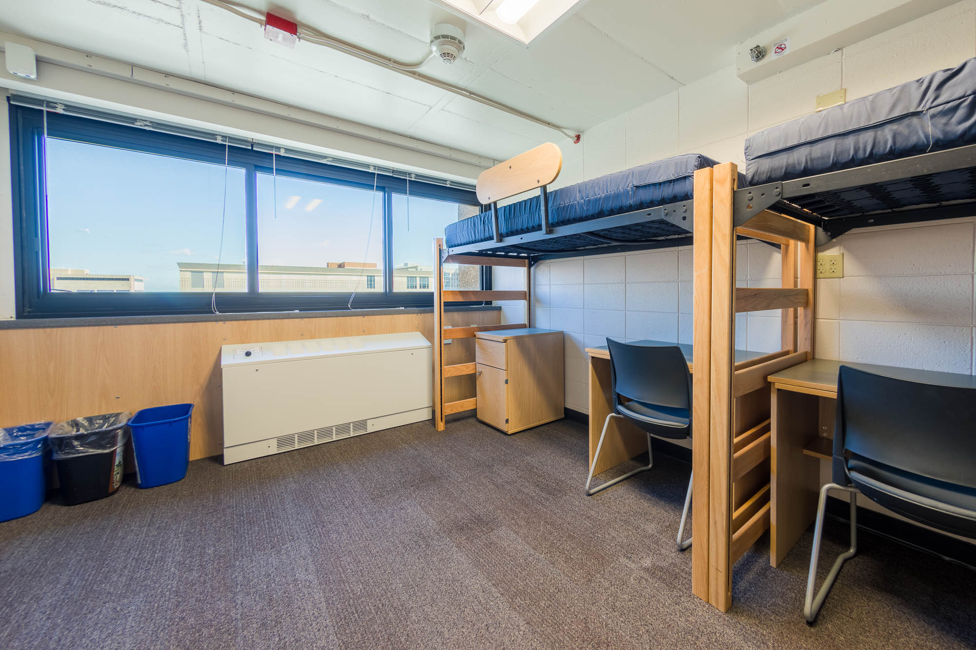 An interior view of a 3-Window Double room in Witte Residence Hall
