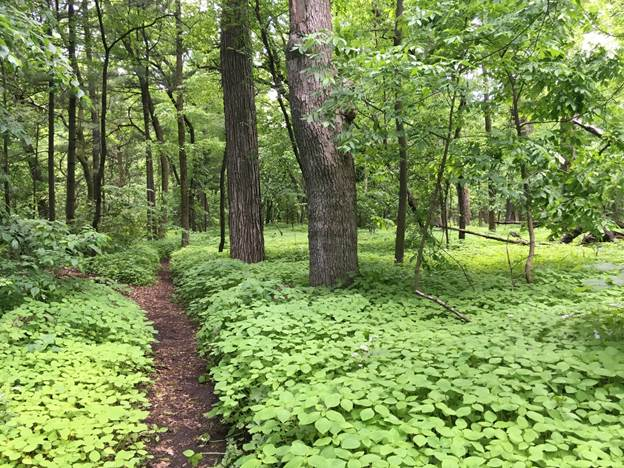 Eagle Heights Woods, Lakeshore Nature Preserve